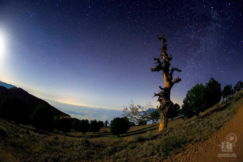 جنگل پر ستاره